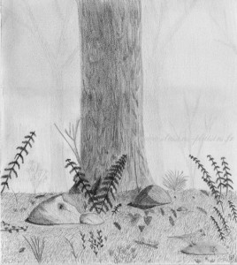 an undergrowth drawing