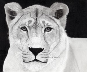 a lioness drawing