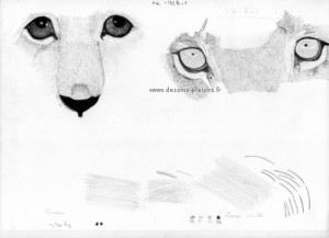 drawing of eyes of lioness and lion cub