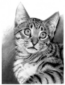graphite pencil drawing of a cat